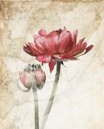 Ravishing Red Bloom