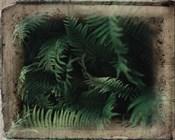 Vintage Framed Lush Ferns