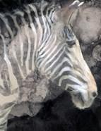 Wistful Zebra Awash