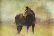 Dark Horse in A Field