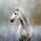 Misty Grey Dappled Horse