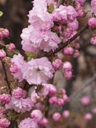 Springalicious Blossoms