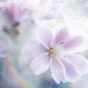 Mystical Gypsy Flower 01