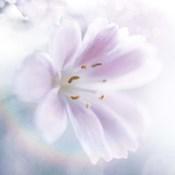 Mystical Gypsy Flower 02