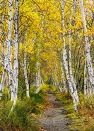 Walk in the Woods - Vertical