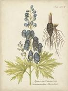 Eloquent Botanical II
