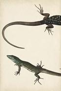 Lizard Diptych I