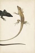 Lizard Diptych II
