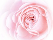 Pretty Pink Blooms I