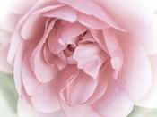 Pretty Pink Blooms II