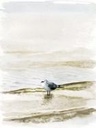 Coastal Gull II