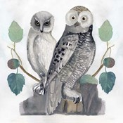 Traditional Owls I
