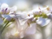 Mist of Lilac II