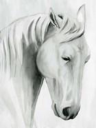 Horse Whisper II