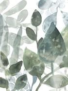 Aquatic Leaves I