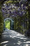 Wisteria Arbor In Garden, Austria, Vienna, Schonbrunn Palace