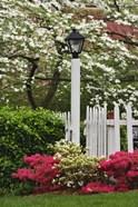 Pickett Fence, Lamp, Azaleas, And Flowering Dogwood Tree, Louisville, Kentucky