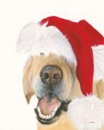 Santa Ruff