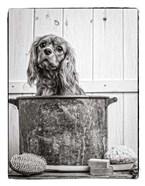 Vintage Puppy Bath