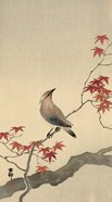 Japanese Waxwing on Maple, 1900-1936
