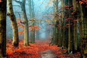 Bussum in Fall