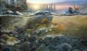 Walleyes On The Rocks
