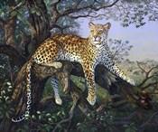 Leopard's Domain