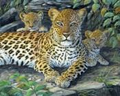 Leopards' Lair