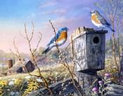 Old Homestead Bluebirds