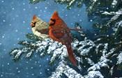 Sharing The Season - Cardinals