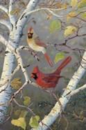 Cardinals In Birch