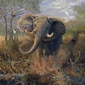 Angry Tusker