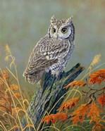 Bright Eyes Screech Owl