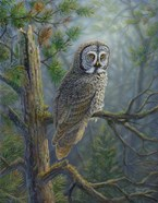 Gray Dawn Owl