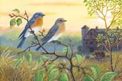 True Blue Bluebird