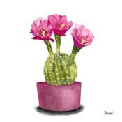 Cactus Flowers V