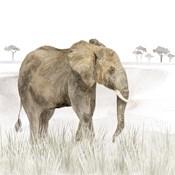 Serengeti Elephant Square