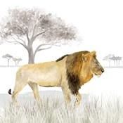 Serengeti Lion Square