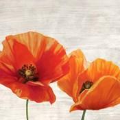 Bright Poppies I