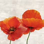 Bright Poppies II