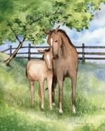 Farm Family Horses