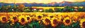 Sweeping Fields of Sunflowers