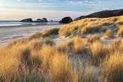 Dune Grass And Beach