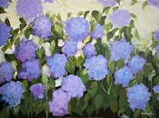 Purple and Blue Hydrangeas