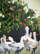 Apples and Ducks
