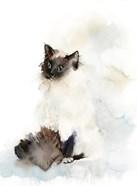 Feline Fine