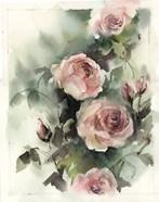 Blush Roses III