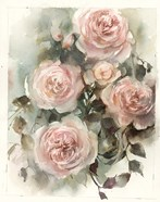Blush Roses IV