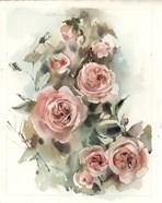 Blush Roses V