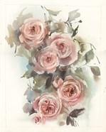 Blush Roses VI